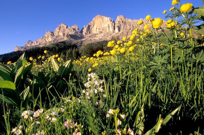 Offerta vacanza Blütenwochen auf der Seiser Alm